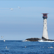 Gannets at the Smalls Lighthouse