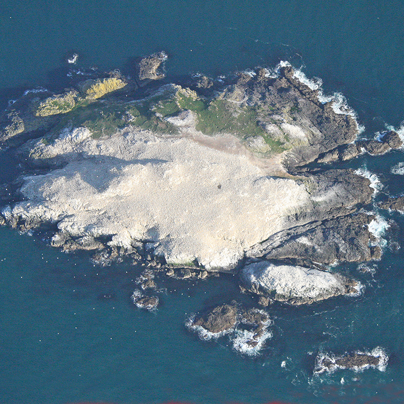 Grassholm from the air, Pembrokeshire