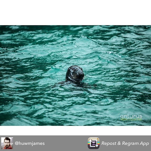 Repost from @huwmjames using @RepostRegramApp - Still some seals out around Ramsey Island off the coast of Mainland Wales. Saw them yesterday with @falcon_boats braving the snow! #filmadventurous #awildlifeexperience