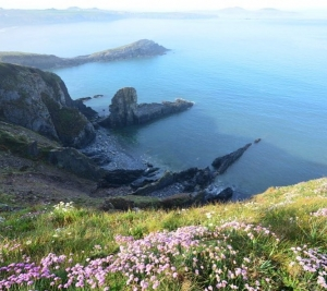 Pembrokeshire at its finest. Come and see the thrift and bluebells on Ramsey #AWildlifeExperience 📷 by @jackiemorrisartist