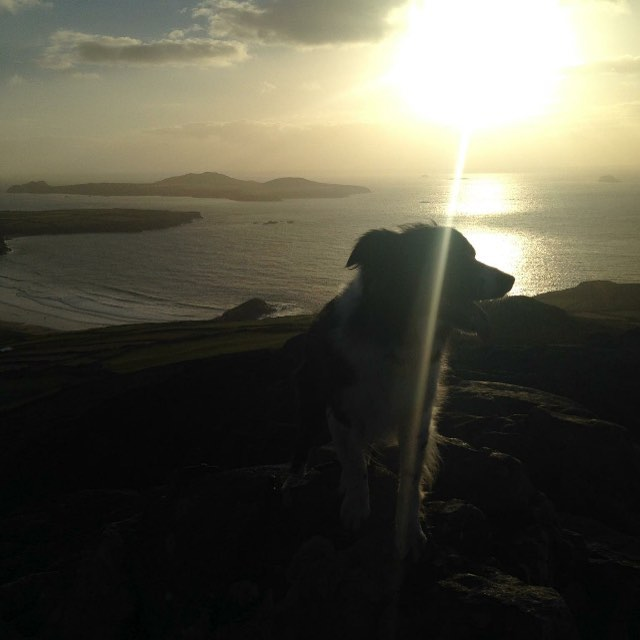 Looks like the sun is going to come to come out tomorrow (fingers crossed!) We have spaces from 13:15 onwards if you would like to join us. Photo starring Rosie the dog, who will not be on the boat tomorrow as she cannot be trusted not to abandon ship.