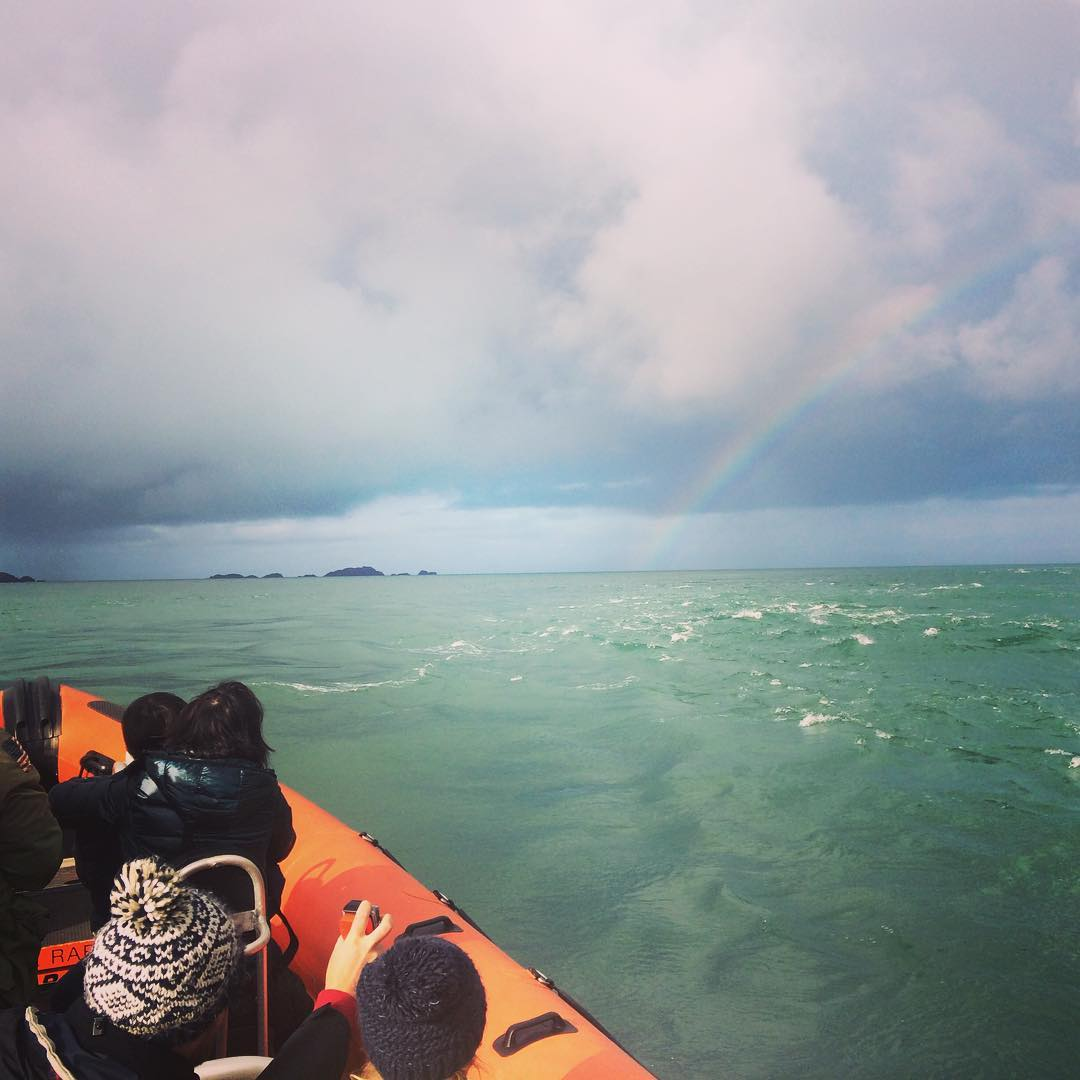 Our last couple of days on the water this season were beautiful. Dramatic skies, mild weather and lots of wildlife.